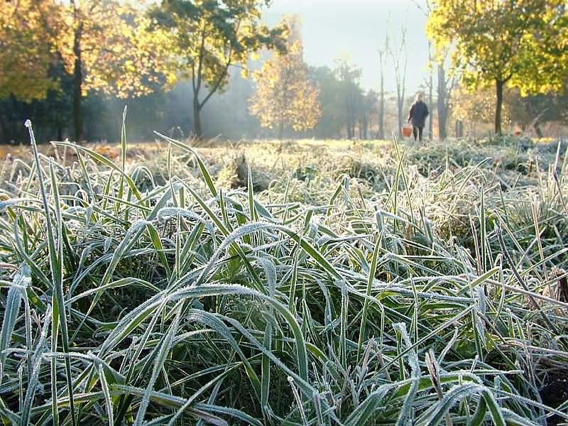 Цієї ночі львівські синоптики прогнозують сильні заморозки -